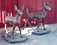 deer104