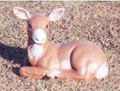 deer101